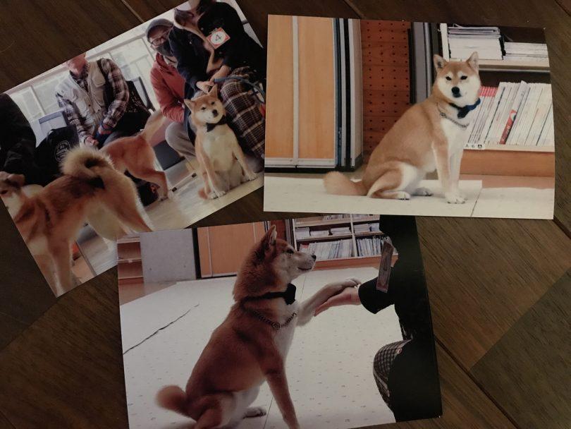 保護犬しまちゃん、試験に合格しました